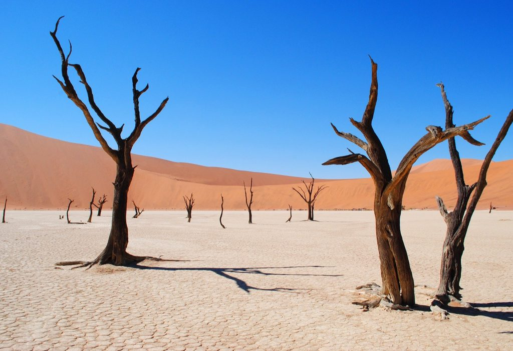 Dead Trees in a Desert