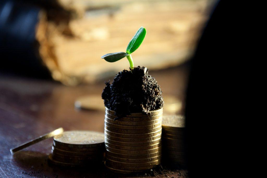 Seedling on Money